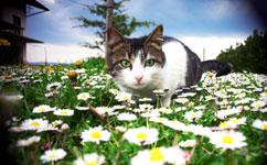 Cat survey reveals impact on birds