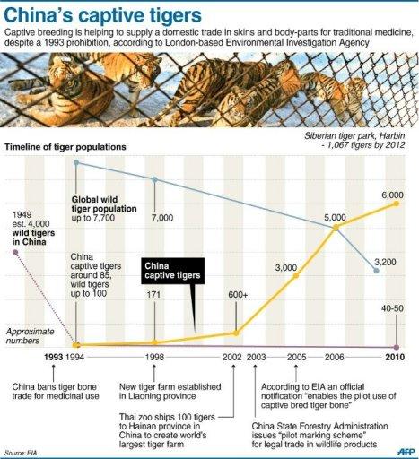 China's captive tigers
