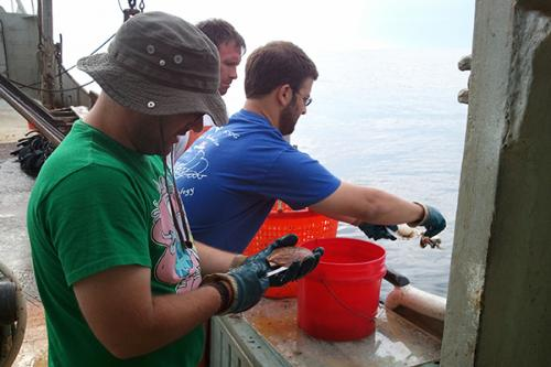 Citizen science: Volunteers analyze images in crowdsourced scallop research project