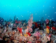 Could coral reefs become sponge reefs in the future?