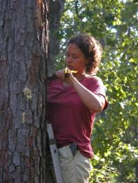 Dartmouth research offers new control strategies for bipolar bark beetles