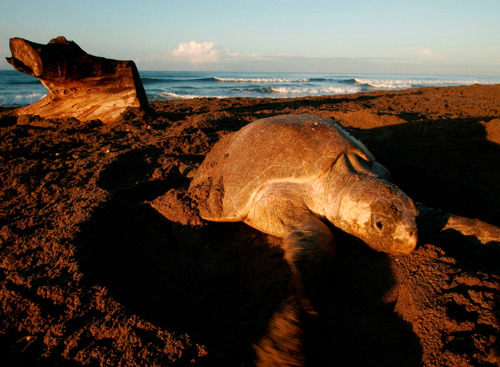 Dead turtle sightings spark alarm among conservationists