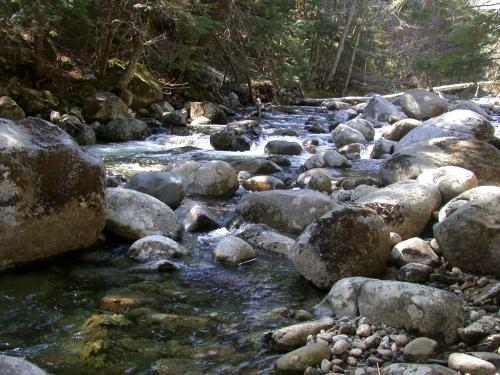 Decreased water flow may be trade-off for more productive forest