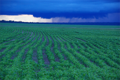 Deep, permeable soils buffer impacts of crop fertilizer on Amazon streams, MBL study finds