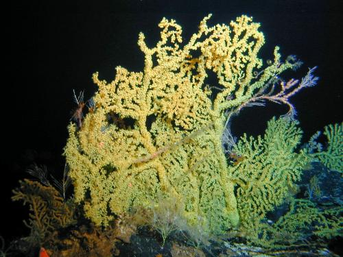 Deep-sea corals record dramatic long-term shift in Pacific Ocean ecosystem
