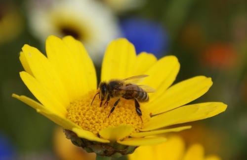 Diesel exhaust stops honeybees from finding the flowers they want to forage