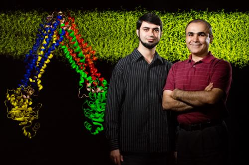 Difficult dance steps: Team learns how membrane transporter moves