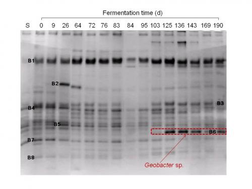 DNA-based method enables the identification of a bacterium as an indicator that obstructs methane fermentation