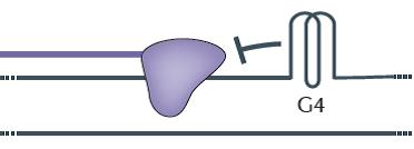 DNA gridlock: Cells undo glitches to prevent mutations