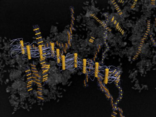 DNA-guided assembly yields novel ribbon-like nanostructures