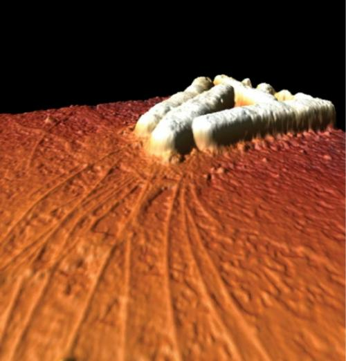 Earthquakes, glue and grappling hooks: Scientists dissect the movement of bacteria