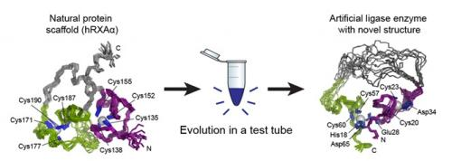 enzyme test tube evolution