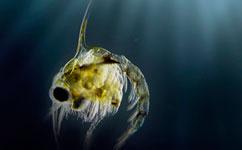 European fisheries flip with long-term ocean cycle