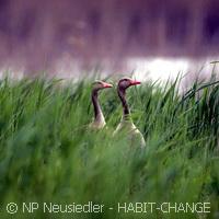 Europe's natural habitats under threat