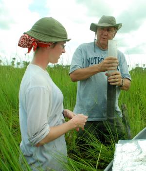 Farming carbon: Study reveals potent carbon-storage potential of manmade wetlands