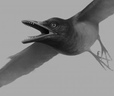 First fossil bird with teeth specialized for tough diet