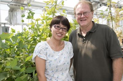 First step to reduce plant need for nitrogen fertilizer uncovered