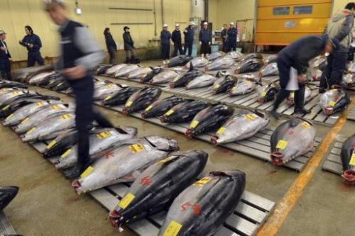 Fishmongers inspect bluefin tuna at Tokyo's Tsukiji fish market on January 5, 2013