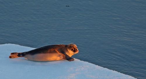 Floe by floe, the ice surrenders its secrets