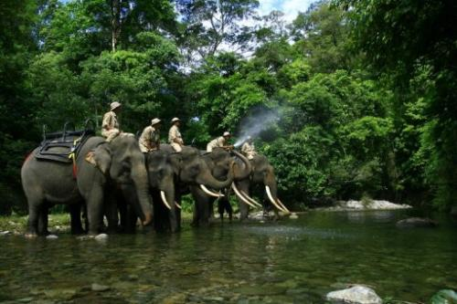 Forest rangers patrol with elephants as part of a campaign against illegal logging in Jantho, Indonesia on May 21, 2010