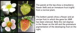 Fruit science: Switching between repulsion and attraction