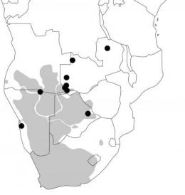 Genetic admixture in southern Africa