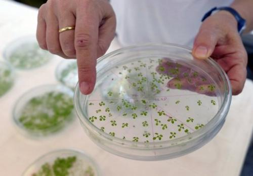 Genetically modified test plants at a biotechnology lab at Litoral university in Santa Fe, Argentina, August 2012