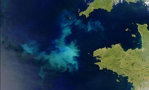 Genetic maps of ocean algae show bacteria-like flexibility