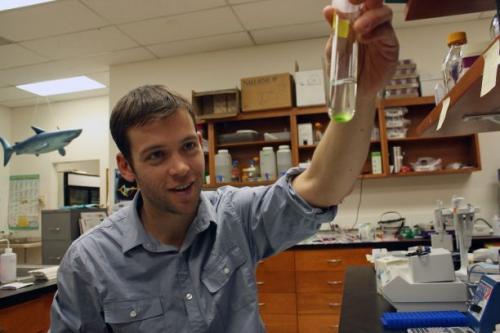 Golden algae: They hunt, they kill, they cheat