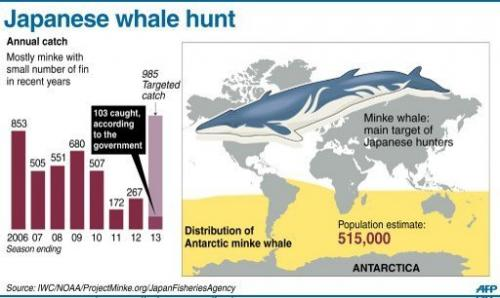 Graphic on Japan's annual whale catch