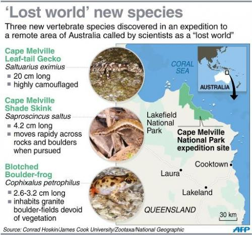 Graphic on three new vertebrate species discovered in a remote part of northern Australia