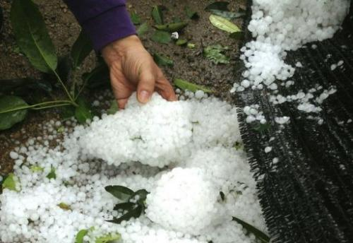 Hailstones are shown after a heavy storm hit parts of Dongguan, south China's Guangdong province, March 20, 2013