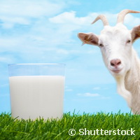 Helping farmers meet the increasing demand for goat's milk