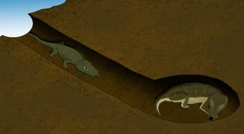 Oddest couple ever found: Amphibian and mammal forerunner share 250 million year old burrow