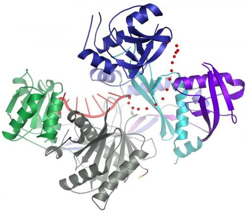 Hijacked protein may lead to new therapeutic interventions