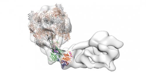 Histone exchanger comes into focus