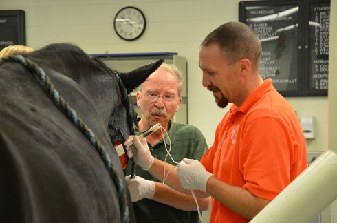 Horses test cutting-edge treatment for stubborn skin turmors