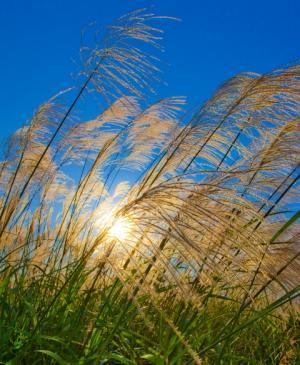 Hydrogen fuel from sunlight