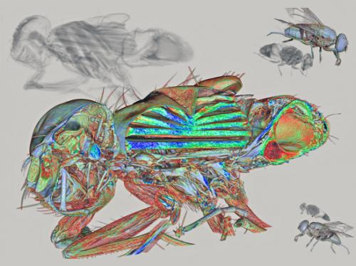'Images of the inside of a fly' elected as computed microtomography's Best Film of the Year