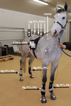 Important step forward for gait analysis of horses