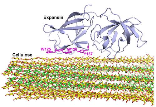 Iowa State, Ames Lab chemists help find binding site of protein that allows plant growth