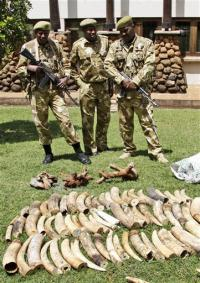 Kenya study: Big jump in elephant poaching deaths
