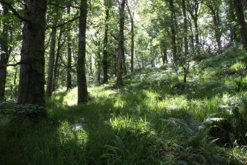 Forests Buffer the Effects of Climate Change on Plants