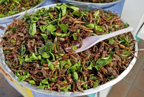 Large-scale edible insect farming needed to ensure global food security