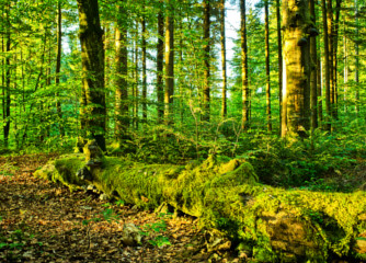 Lilliput forests, global certification