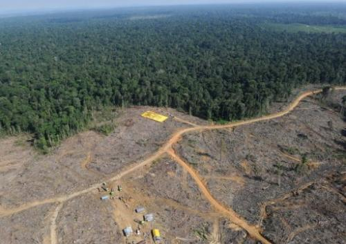 Logging works cut into the virgin forest in Jambi province, Sumatra island, Indonesia in 2010