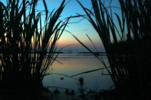 Marshland is seen on May 11, 2010 in Venice, Louisiana
