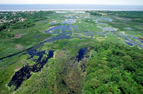Measuring microbes makes wetland health monitoring more affordable