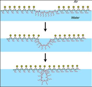«Молекулярные липучки» могут стать заменой натуральных антител