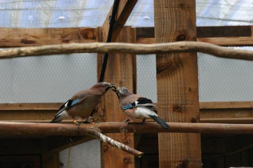 Monogamous birds read partner's food desires